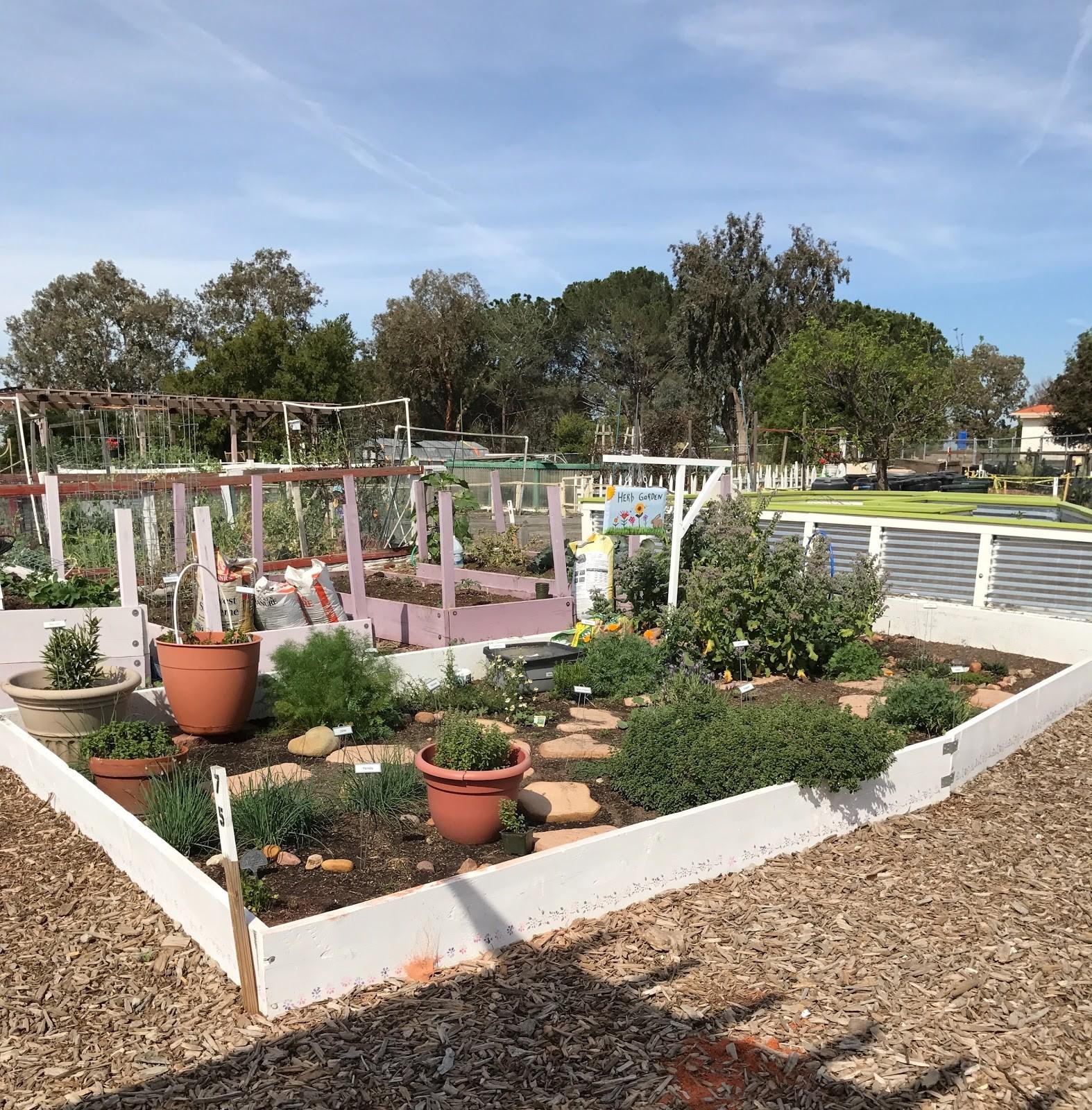 Community Herb Garden 2010