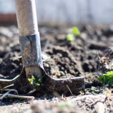 Is your soil ready for Spring planting