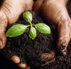 Bulk Soil Delivery